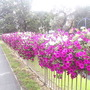 Flower_beds_on_H_don_ring_road_16-08-08_002.jpg