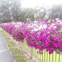 Flower_beds_on_H_don_ring_road_16-08-08_002.jpg