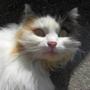 Bosham_cat_2