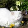 Puddles Sunning Himself on my Garden