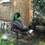 Bosham wildlife riverside and gardens