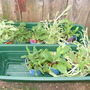 Plant bargains!