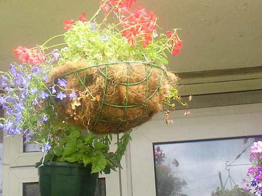 Hanging basket on balcony 25-07-07 002
