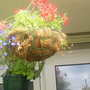 Hanging basket on balcony 25-07-07 002
