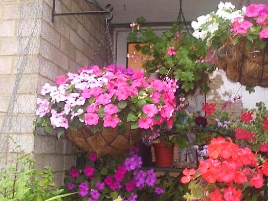 Hanging_basket_on_balcony__02-08-08_001.jpg