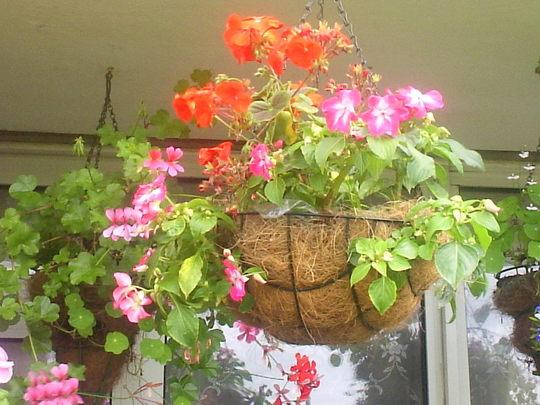 Hanging_basket_on__balcony_25-07-07_004.jpg