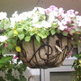 Hanging_basket_with_Busy_Lizzies__Centre__30-08-08_03.jpg