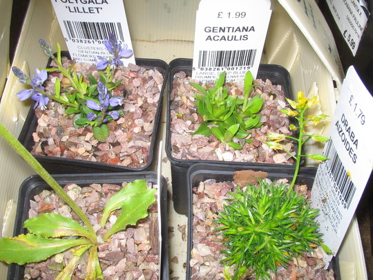 Alpines from Wisley