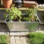 New_planter