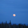 Pink Full Moon Rising