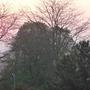 sunrise in the misty park