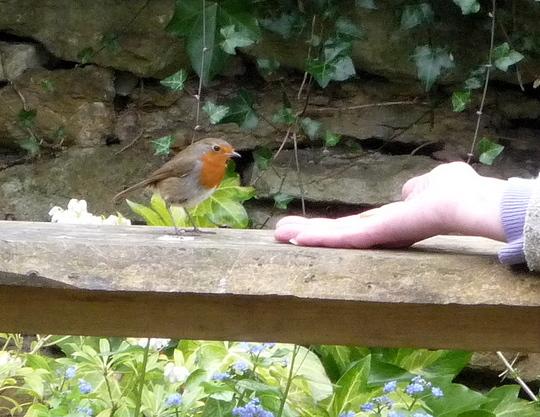 Bird in hand 1