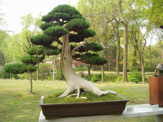 bonsai, taken in hotel garden, China