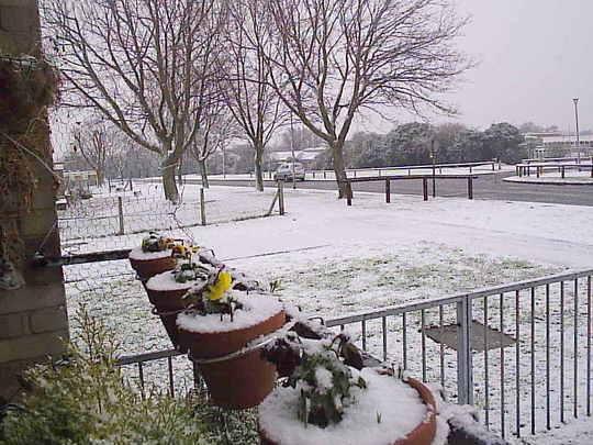 Snowing_2pm__2009-02-02_009.jpg