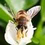Wasp (I think)
