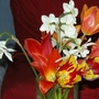 mixed tulips, some genuine, some imposters (Tulipa)