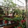 Plant_market
