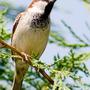 Garden_birdweb