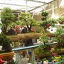 Plant_market_2