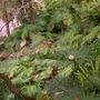 Plants_pics_104