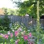 Mullein, echinops, Asiatic Lilies,dwarf dahlia, liatris.