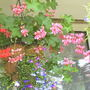 Hanging_basket_conical_left_14_07_05