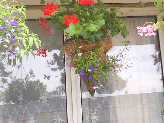 Hanging_basket__conical__01-07-05.jpg