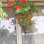 Hanging_basket__conical__01-07-05.jpg