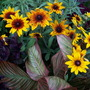 Summer_flowers_7_21_06_041
