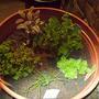 Tri-Colour Sage, Parsley, Oregano, Lemon Thyme and Chives