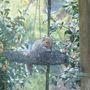 Wet_squirrel
