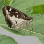 butterfly on papaya leaf