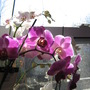 Phals love this early a.m. light.