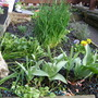 Teeny weeny front garden