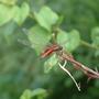 Venezuela - dragonfly