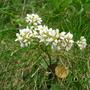 Wildflower  - Marsden Bay