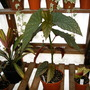 Greenhouse_early_2008_baby_004