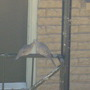 Two amorous doves.