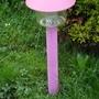 Pink Solar light