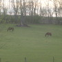 Horses in the rolling hills of Kentucky.