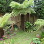 Tree ferns x3
