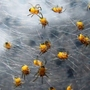 10_spiderlings_20_04_09