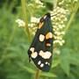 very pretty butterfly