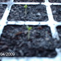 Our_garden_in_2009_089