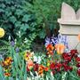 Tulips & Wallflowers - April 2009