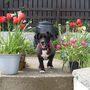 jodi...spring 08
