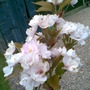Garden_pics_029