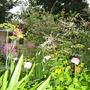 calla, dill, zinnia, artemesia, honeysuckle, acidanthera