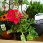 Garden centre buys