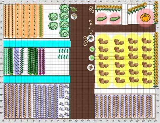 veg plot plan